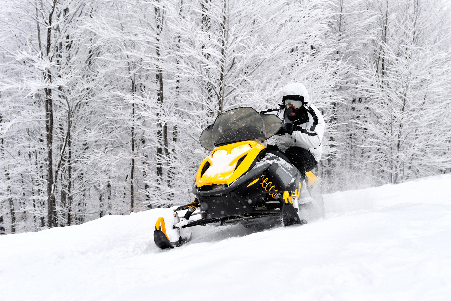 Snowmobile on fresh snow with snow covered trees in background